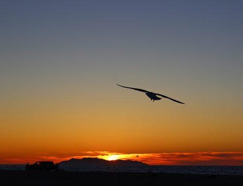 Какво ще стане, ако птица отиде в училище по летене?